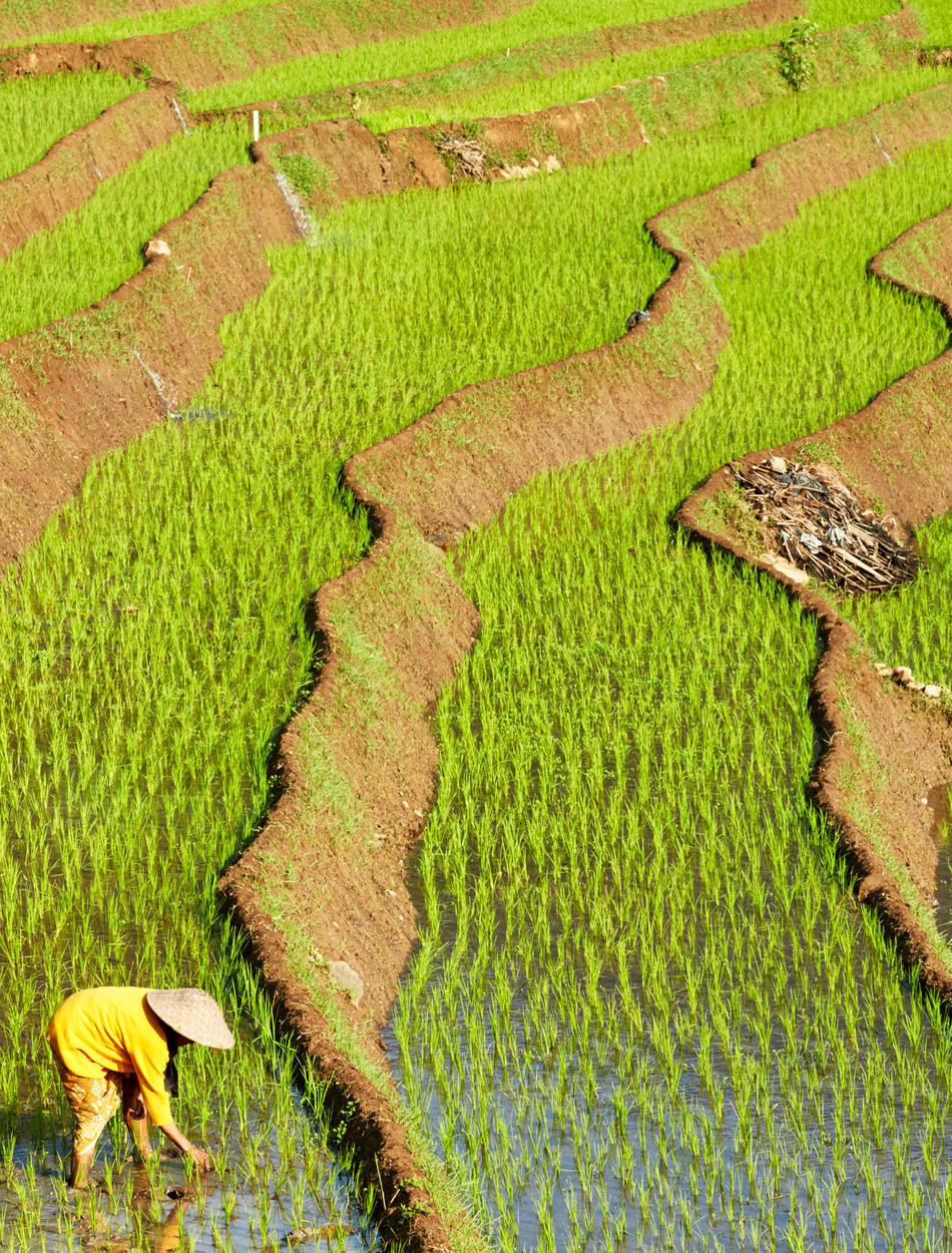 Amanjiwo, Bali - Rice Fields